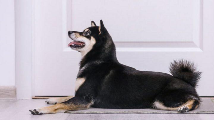 Comment choisir un tapis pour chien ?